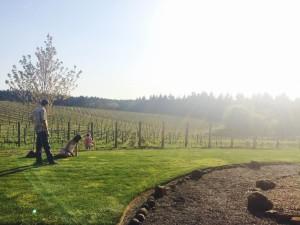 The lush life of bud-break wine experiences.