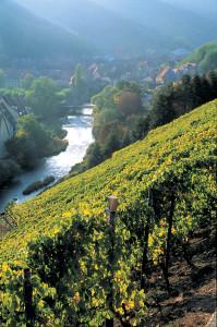 Rangen Vineyard, Alsace Copyright: Conseil Vins Alsace