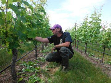 Riesling Rising – Weinbau Paetra